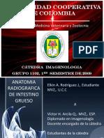 ANATOMIA RADIOGRAFICA DE INTESTINO GRUESO