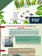 Diseño y construcción de estanques Pregunta (CACHAMA).pptx