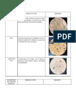 Procedimiento, Resultados, Discusión de resultados- Practica nº 4