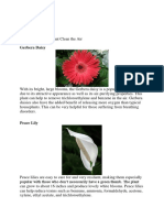 Examples of Plants that Clean the Air.docx