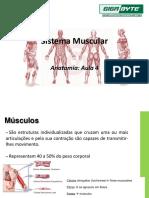 Aula 4 - Sistema Muscular
