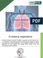 Aula 6 - sistema respiratório