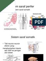 Sistem saraf somatik