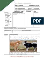ACCION HORMONAL EN LOS ANIMALES