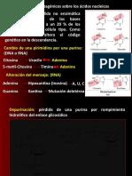 Mutaciones Acidos Nuclei Cos, Replicacion Dna, Transcripcion