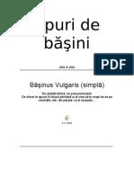 basini