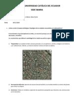 Renacimiento morfología y tipología