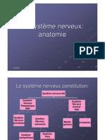 Anatomie Du Systeme Nerveux