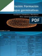 Formación de Las Capas Germinativas GACB