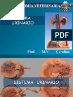 Sistema Urinario Prof Carolina Maldonado