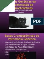 Bases Heranca Genetica