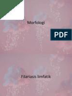 Morfologi bracoftii