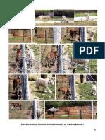practica Zoo.docx