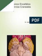 Nervios_craneales.pptx