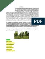 trabajo de botanica herbario.docx
