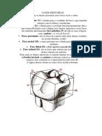 FACES DENTÁRIAS.docx