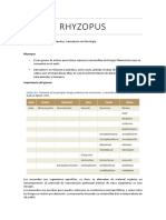 Rhyzopus.docx