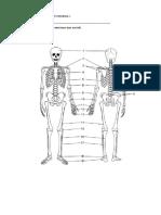 Сам.раб. Скелет человека.docx