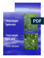 VSF_231_Flori_Lect_16_Marigold