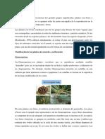 PLANTAS-1.docx