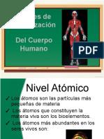 Niveles de Organización del cuerpo humano