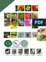 Flores e insectos.docx