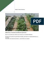 Alfalfa Ormus _ Documento extendido del experimento _.docx
