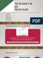 Músculos Flexores.pptx