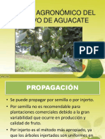 CHARLA AGUACATE.pptx