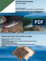 specii-marine.ppt