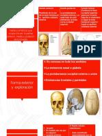 Región occipitofrontal.pptx