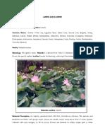 Jammu and Kashmir State Flower _Final__3_11