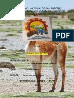 ECOLOGIA DE VICUÑAS.docx
