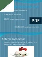 Sistema locomotor.pptx