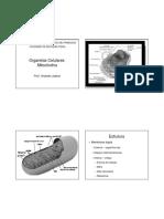 Mitocondria e biologia celular.pdf