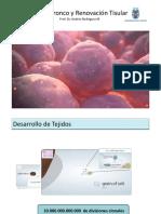 Células Tronco y Renovación Tisular