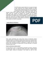 Relatório (1).docx