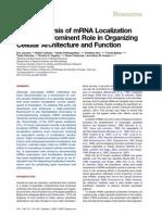 RNA Function