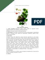 tuber stephaniae glabrae.pdf