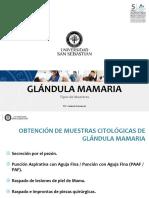 12. Tipos de Muestras Gl. Mamaria (1)
