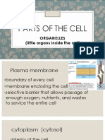 Parts of the cell shortened.pptx