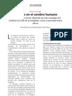 miedo en el cerebro humano (4).docx