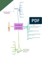 Generalidades_del_aparato_digestivo