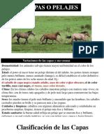 pelajes caballos.pdf