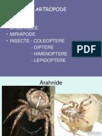 0_artropode.ppt