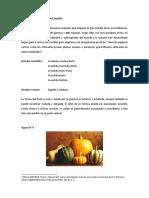 Generalidades del Zapallo
