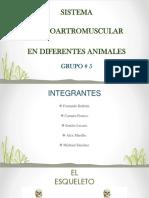 sistema osteoartromuscular en diferentes animales grupo 5