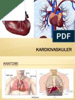 babim kardiovaskuler