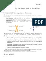 Mitose-meiose pdf
