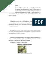 Clase Mamífero1